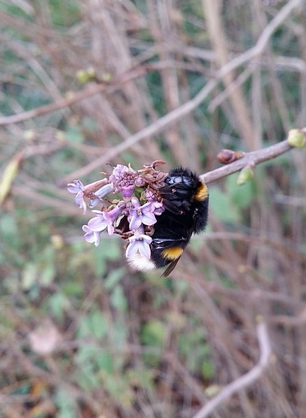 Bumblebee Landscapes Countryside Nature Bee Nature