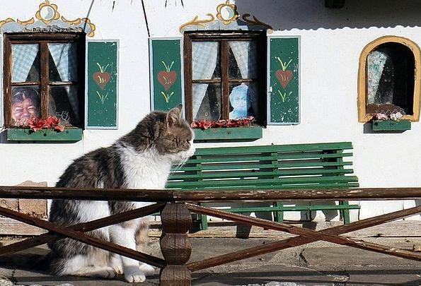 Pet Domesticated Feline Cat Home Cat Bude Cozy Exp