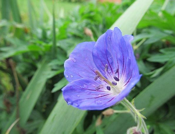 Flower Floret Landscapes Vegetable Nature Purple E