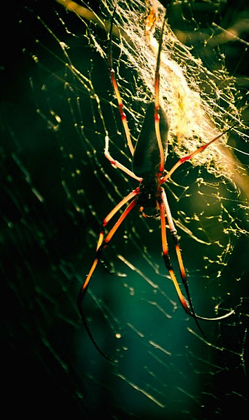 Spider Insect Bug Cobweb Animal Physical Dangerous