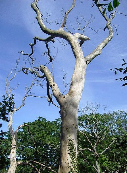 Tree Sapling Bornholm Dead Plant
