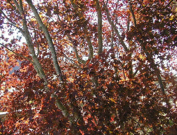 Fall Reduction Landscapes Plants Nature Leaves Gre