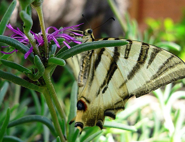 Butterfly Bug Wings Annexes Insect Resting Latent