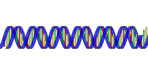 Dna Science Discipline Double Helix Chain Rna Life