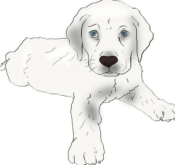 Puppy Brat Canine Labrador Retriever Dog Labrador