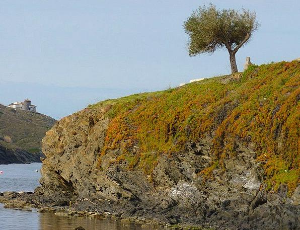 Tree Sapling Reserved Sea Marine Booked Rock Pilla