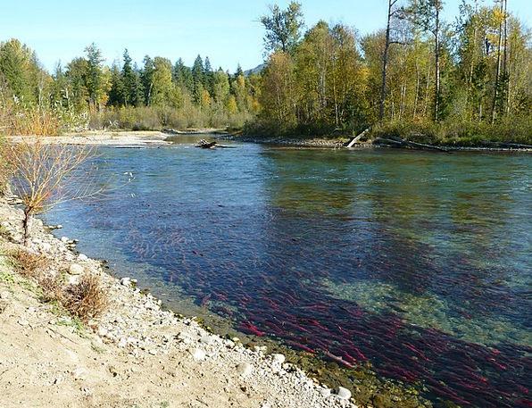 Sockeye Landscapes Nature Run Track Salmon River A