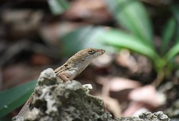 Gekko Landscapes Nature Animal World Florida Lizar