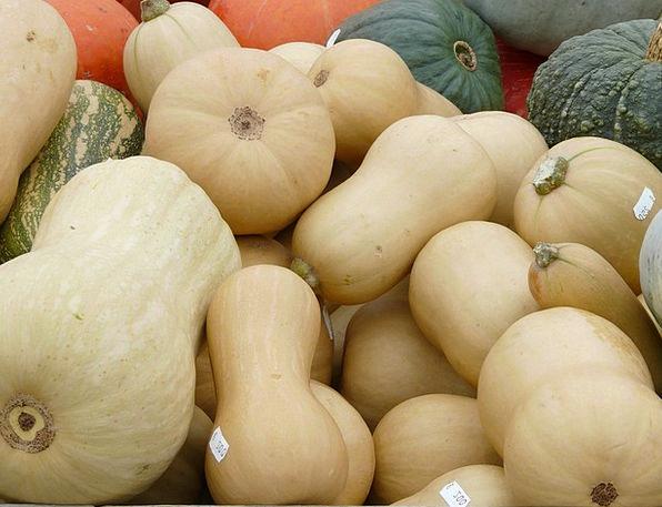 Musky Winter Squashes Pear Pumpkin Cucurbita Mosch