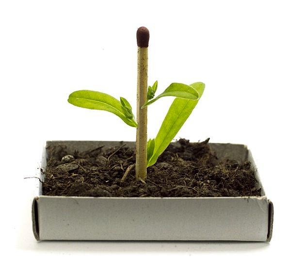 Plant Vegetable Landscapes Rising Nature Genetic H