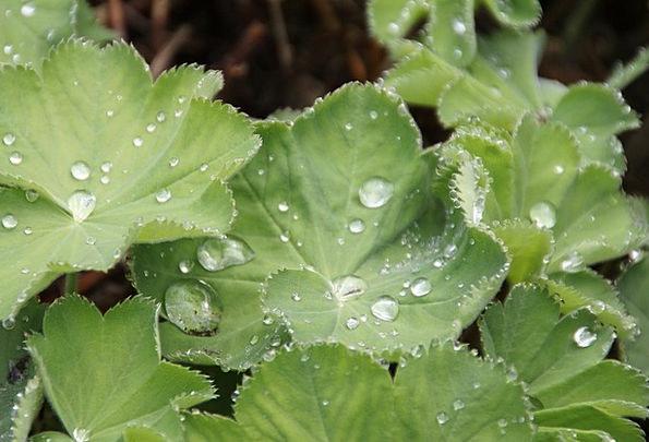 Drop Of Water Periodical Dew Precipitation Journal