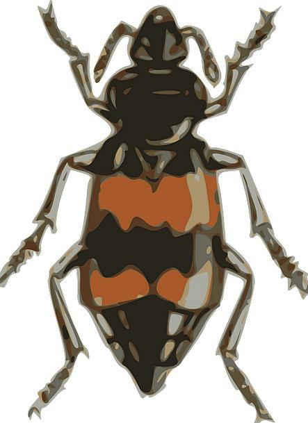 Insect Small Minor Beetle Crawl Skulk Free Vector
