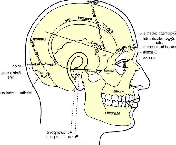 Head Skull Diagram