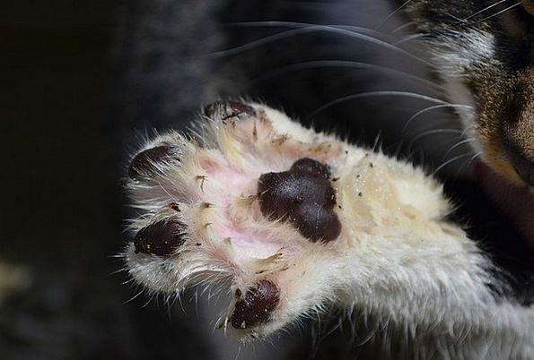 Cat'S Paw Paw Hand Paw Print