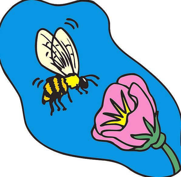 Bee Hovering Flower Floret Flying Insect Bug Polle