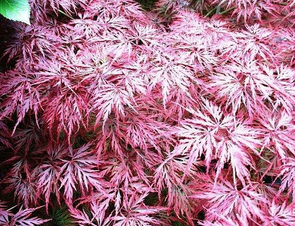 Bush Scrubland Landscapes Nature Plant Vegetable S