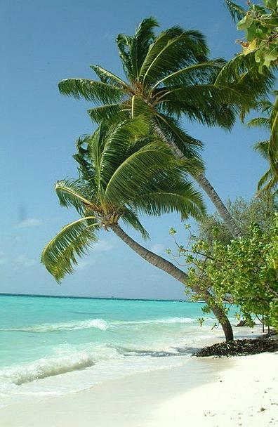 Maldives Vacation Travel Beach Seashore Palma