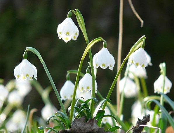 Snowflake Snow Landscapes Coil Nature Spring Flowe