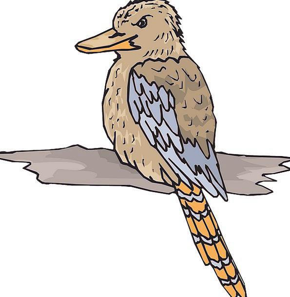 Bird Fowl Timber Wings Annexes Wood Beak Bill Feat