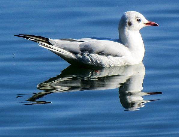 Seagull Fowl Animal Physical Bird