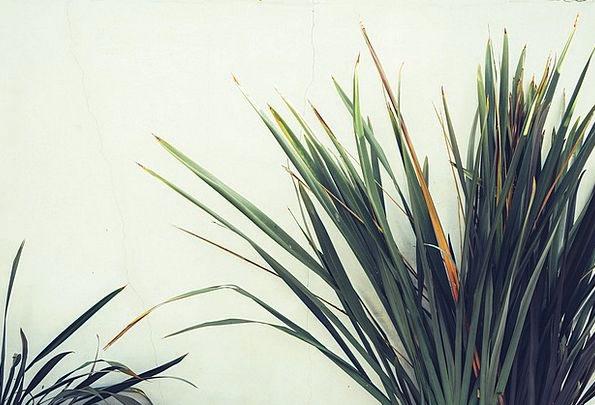 Plant Vegetable Landscapes Tribute Nature Leaves G