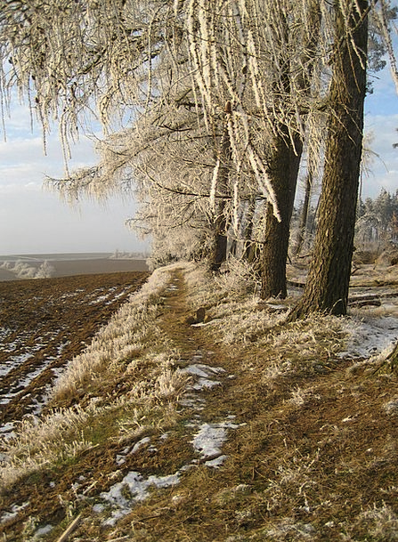 Forest Woodland Landscapes Season Nature Ice Frost