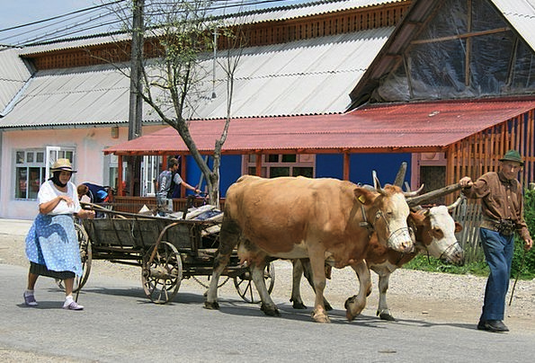 Peasantry Oxen Steers Romania Charette