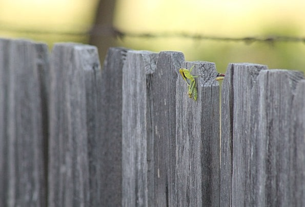 Grasshopper Barrier Rural Country Fence Insect Bug