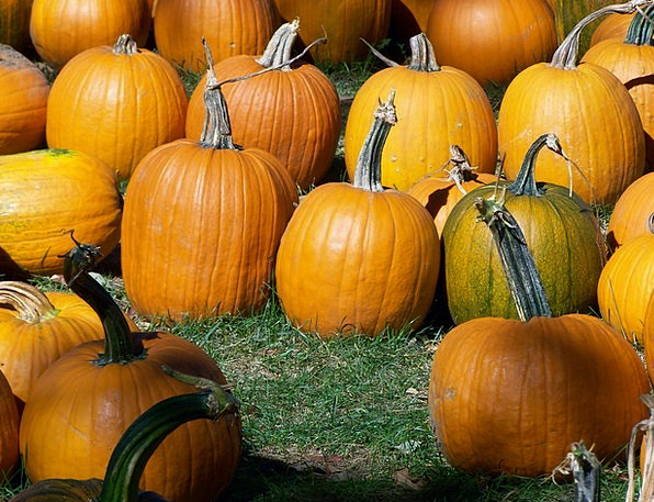 Pumpkins Fall Reduction Autumn Halloween Grass Law