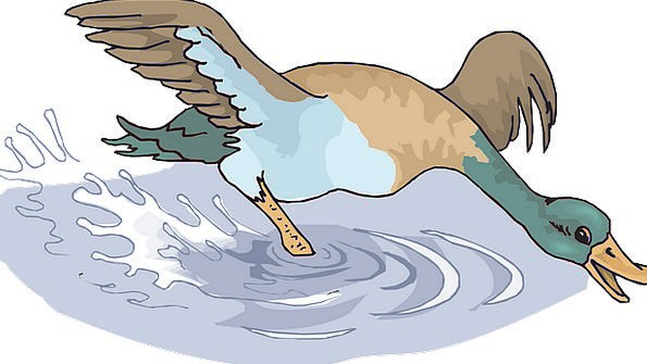 Water Aquatic Squelch Happy Content Splash Bird Fo
