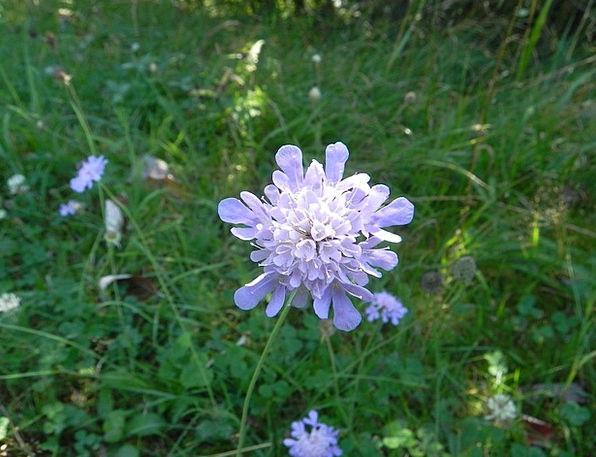 Grassland Plants Landscapes Instruction Nature Flo