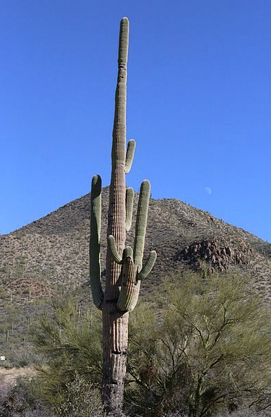 Cactus Arizona Tuscon Southwest Desert Reward