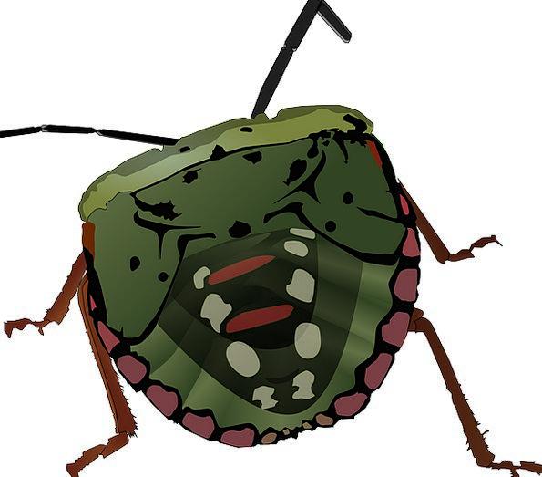 Stink Bug Germ Insect Bug Wildlife Stink Fuss Inve