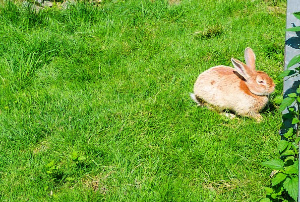 Hare Bunny Animal Physical Rabbit Grass Cute Attra