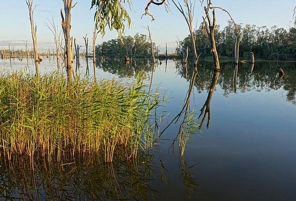 Marshes Swamplands Landscapes Marsh Nature Pond Po