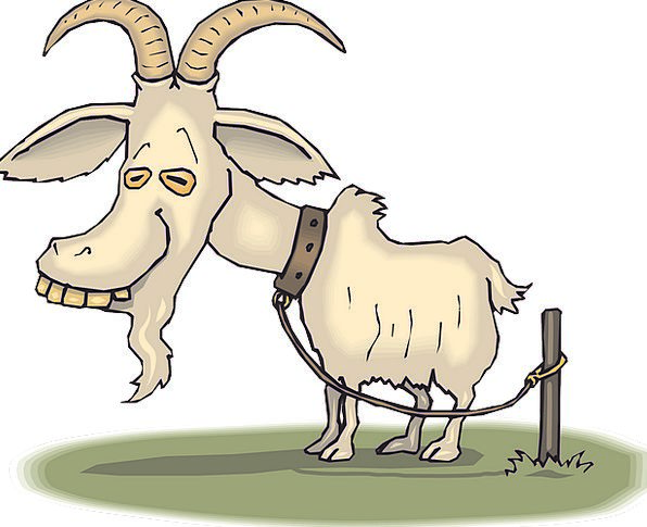 Old Ancient Animal Physical Goat Tired Weary Free
