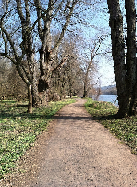 Trail Track Landscapes Coil Nature Trees Plants Sp