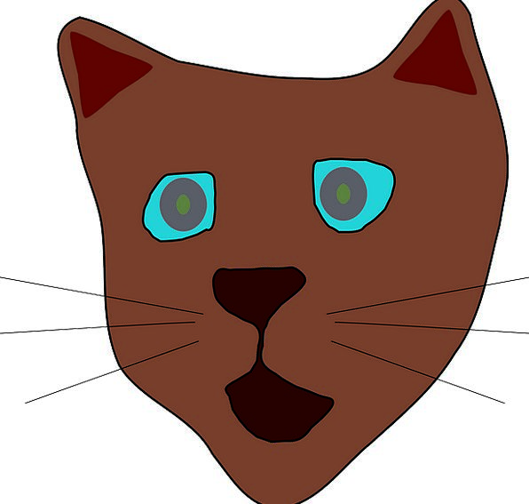 Cat Skull Face Expression Head Kitty Brown Chocola