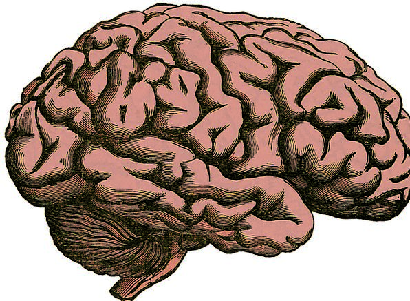 Brain Intelligence Medical Structure Health Human