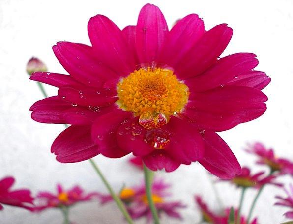 Flower With Drops Of Water Landscapes Floret Natur