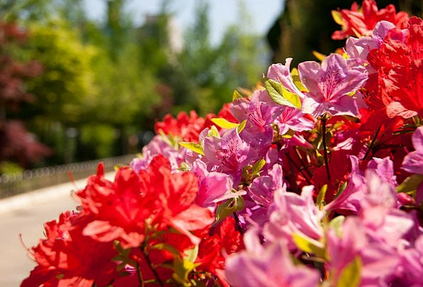 Flowers Plants Landscapes Countryside Nature Scene
