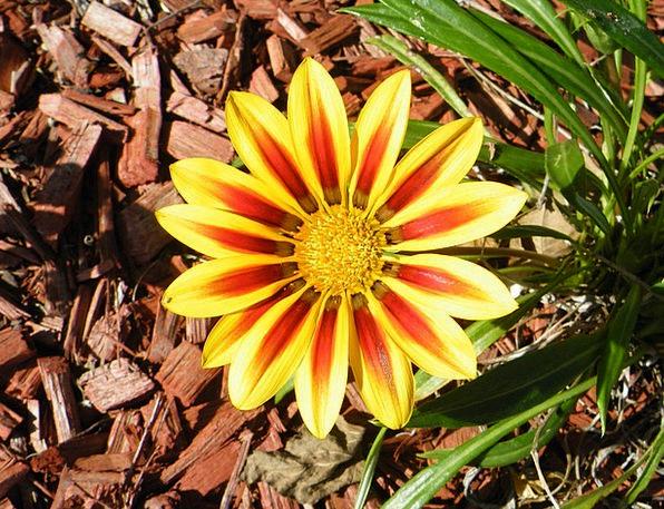 Daisy Landscapes Flowery Nature Plant Vegetable Fl