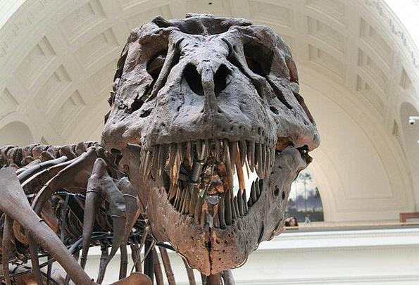 Tyrannosaurus Primeval Skeleton Minimum Prehistori