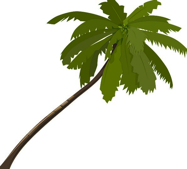 Palm Tribute Vacation Sapling Travel Fronds Leaves