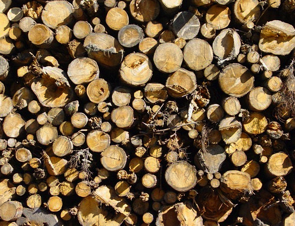 Holzstapel Trees Plants Wood Strains Straining Tre