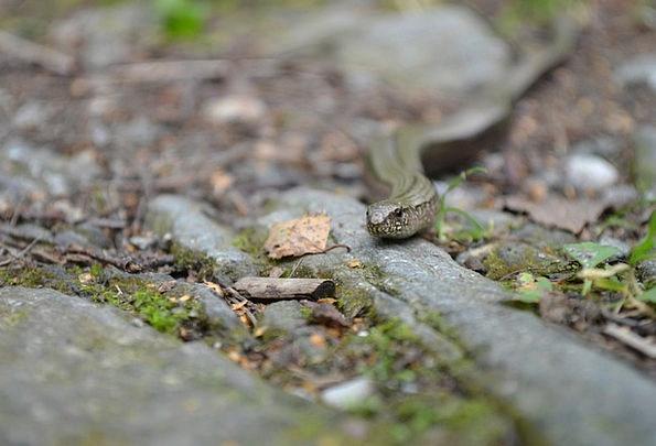 Snake Serpent Landscapes Trail Nature Forest Woodl
