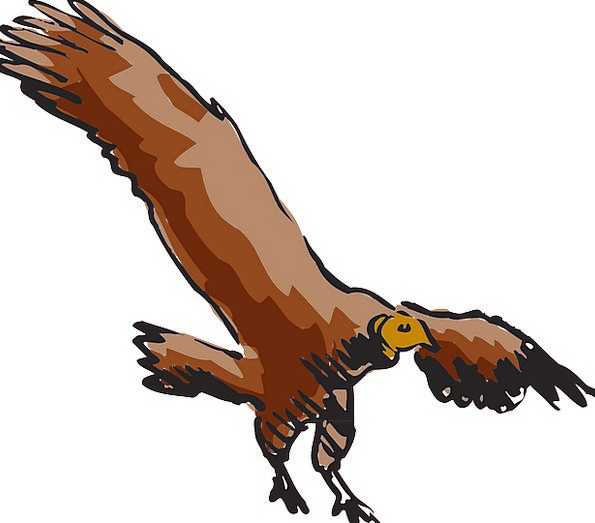 Vulture Predator Buzzard Scavanger Bird Fowl Soard