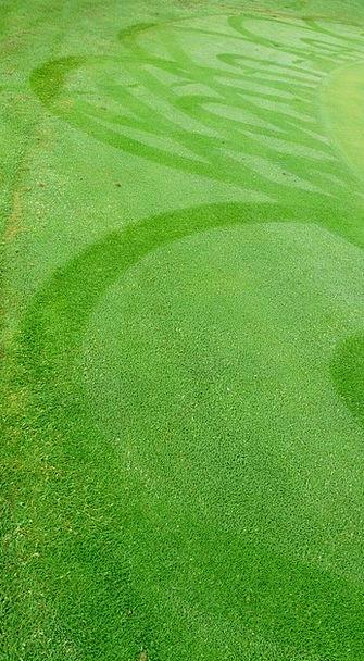 Meadow Field Lawn Green Lime Grass Rush Haste Stru