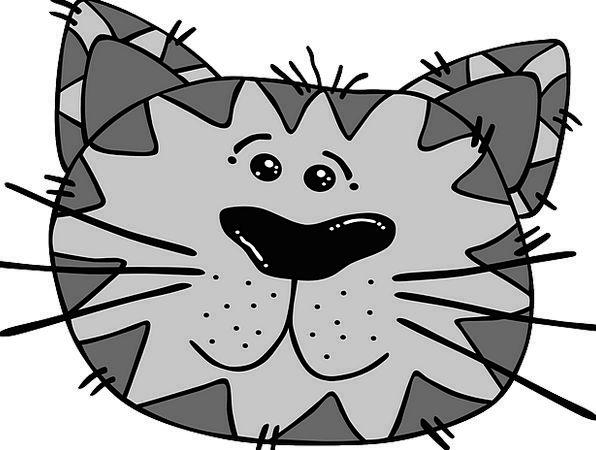 Cat Expression Gray Leaden Face Tabby Animal Physi