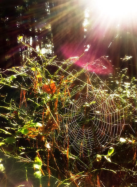 Spider Web Landscapes Countryside Nature Forest Wo
